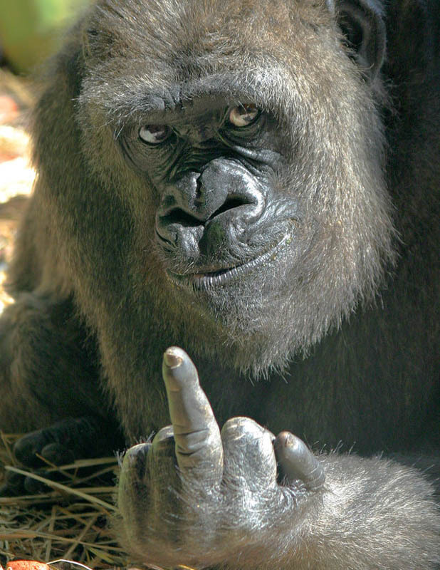 Ma alla fine mi conviene cambiare la mia hd 800 oppure..... Gorill10