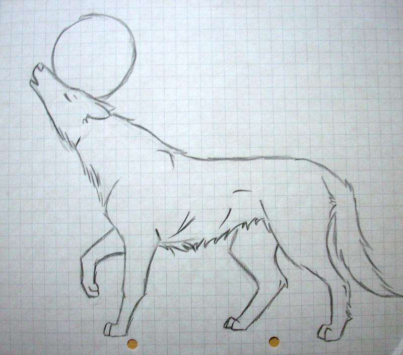 Wolf Anatomy Dscn0710