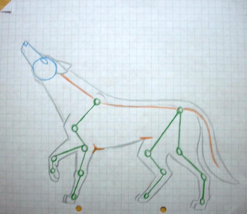 Wolf Anatomy Dscn0711
