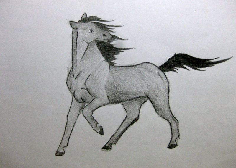 Horse Sketches Img_1511