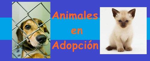 Adopciones de animales