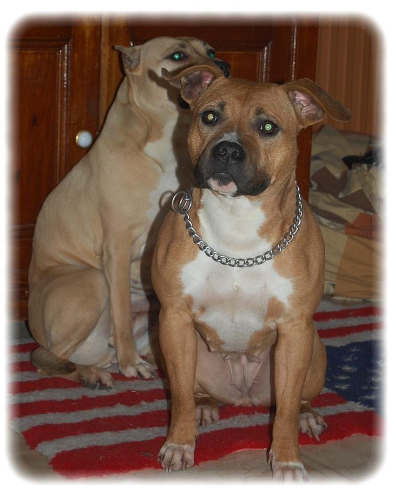 les chiens de Nana Dsc_0110