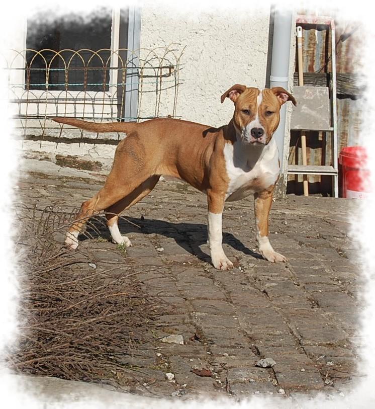 les chiens de Nana Dsc_0310