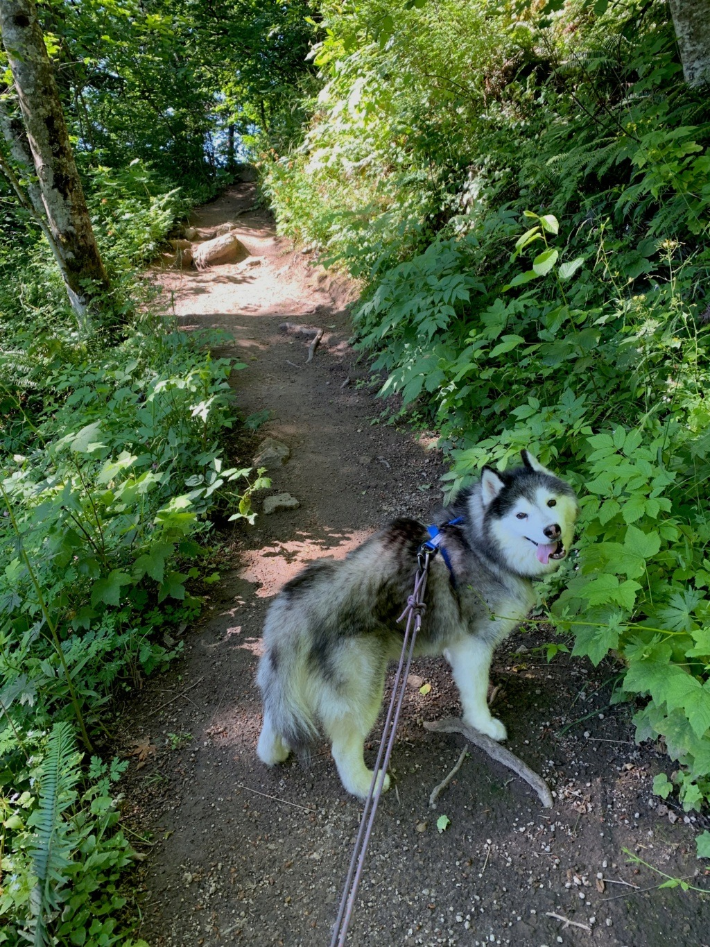 Hiking with Dogs: Cape Horn, WA B_on_t10