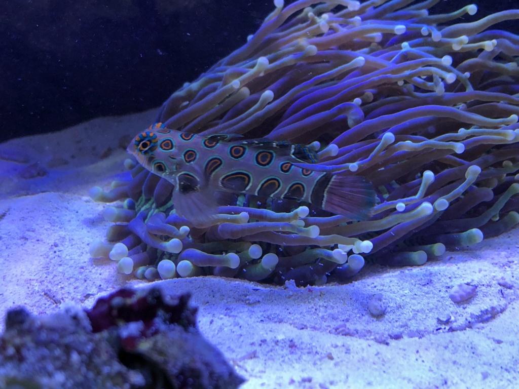 photos de poissons et coraux  - Page 4 3c065810