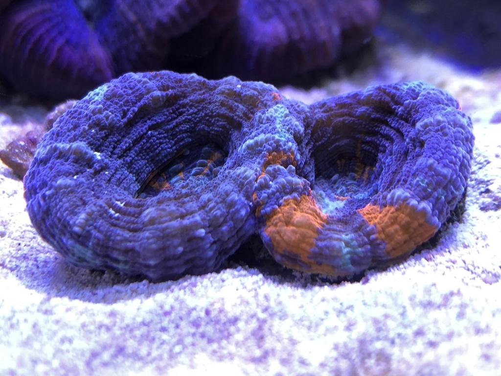 photos de poissons et coraux  - Page 7 Ais5qy10