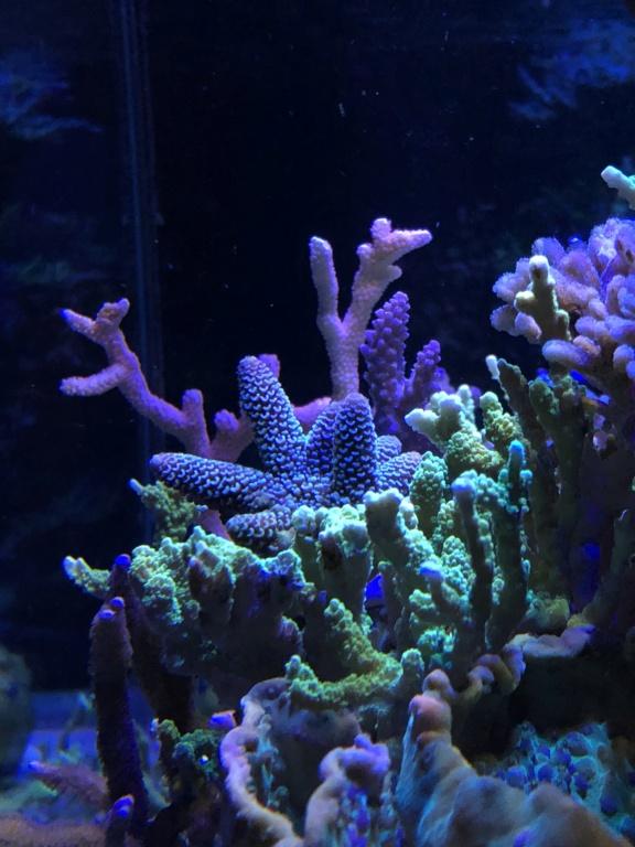 photos de poissons et coraux  - Page 8 Ce076510