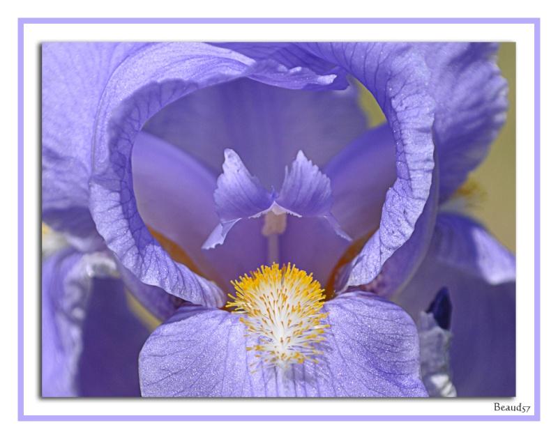 Concours photo du mois de mai 2011. Thème : En avril, ne te découvre pas d'un fil, en mai fait ce qu'il te plait... Fleurs10