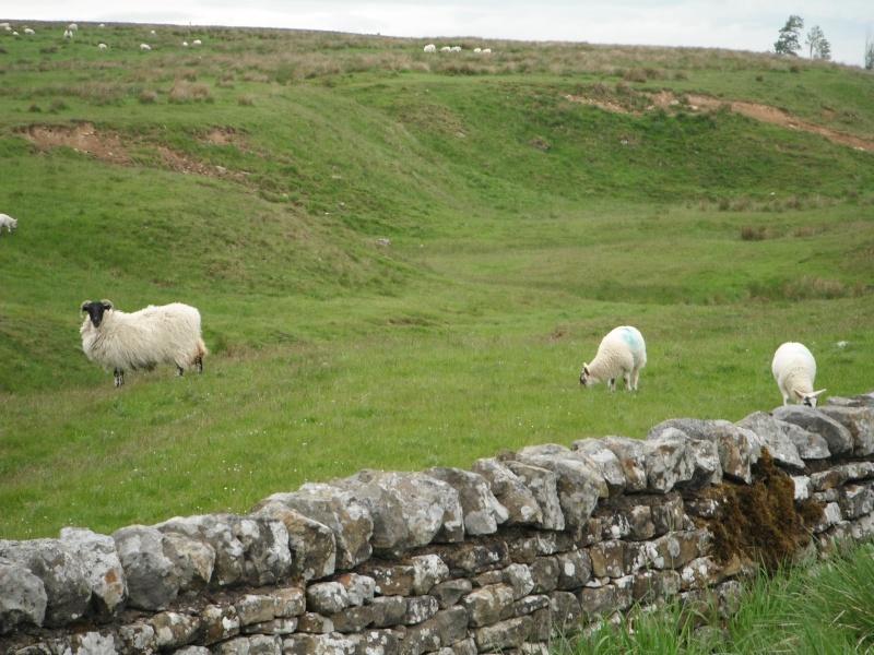 Un petit gout d'inachevé ... Scotland 2011 Dscf5521