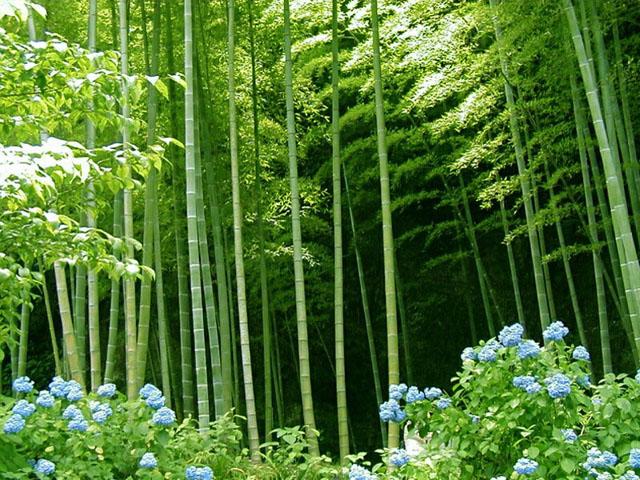 Seinphy lub tsev sib fim kaj siab lug - Page 4 Bamboo10