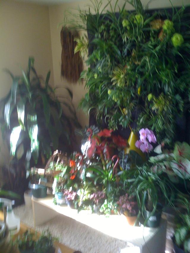 Mon mur végétal Img_0418