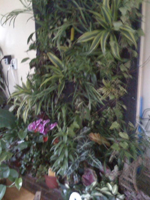 Mon mur végétal Img_0513