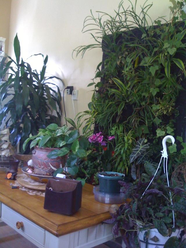 Mon mur végétal Img_0514