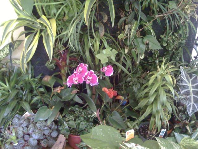 Mon mur végétal Img_0515