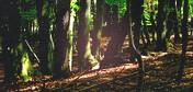 Fin del Bosque