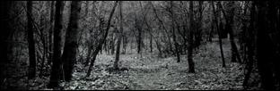 A Floresta Obscura A_flor10