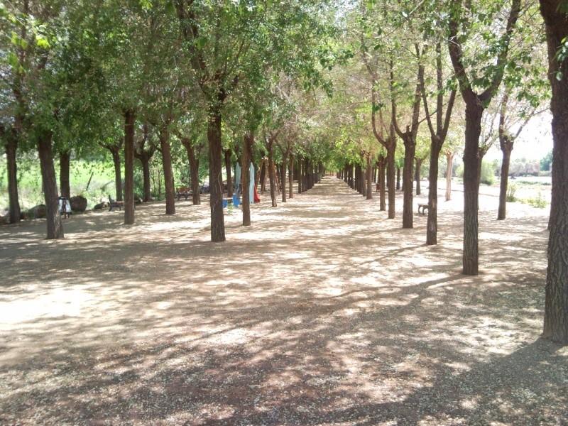 Foto parque de los patos 11041510