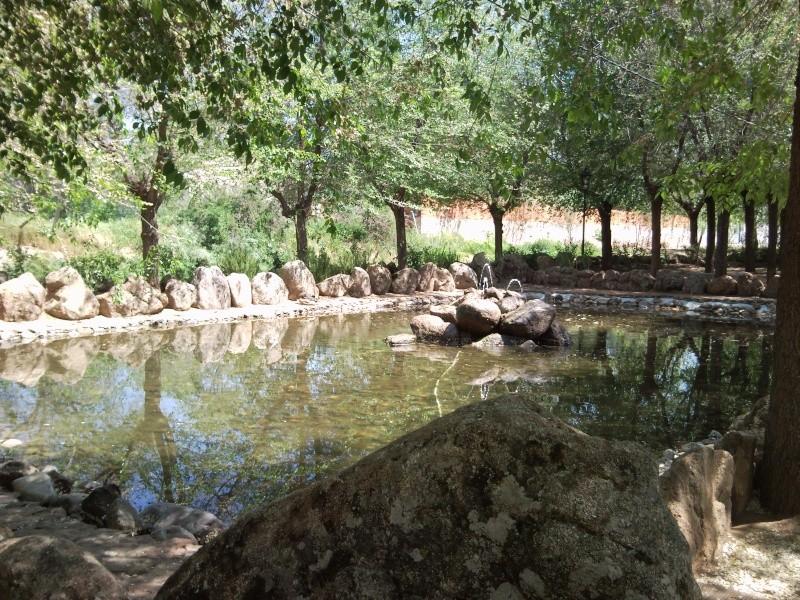 Foto parque de los patos 11041514