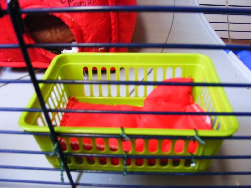 Photos de vos cages - Page 5 Dscf5942