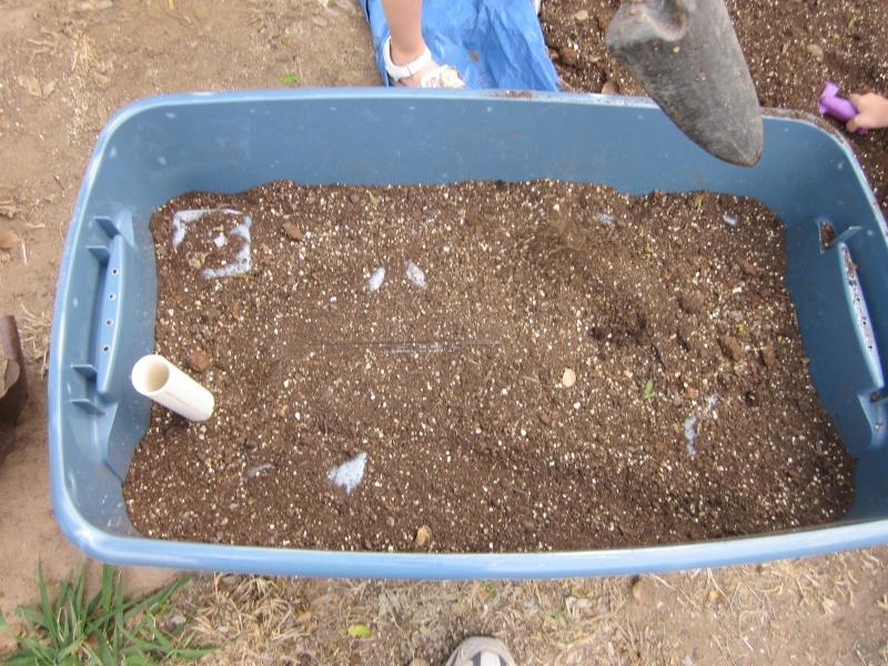 Self Irrigated Planter Img_0711