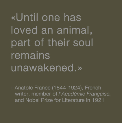 LOVE FOR ANIMALS - Page 2 44880910