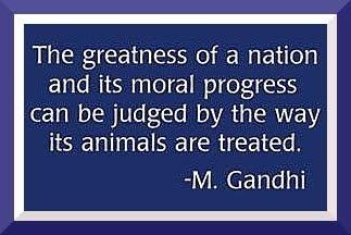 LOVE FOR ANIMALS - Page 2 Gandhi18
