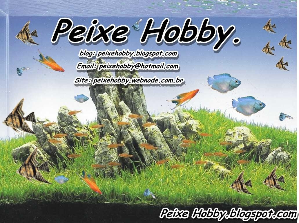 Peixehobby Forum.