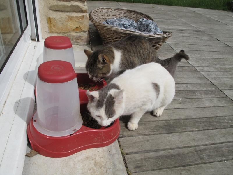 un p'tit coup de main des ptits korrigans pour une petite chatte nomade.... Img_8718