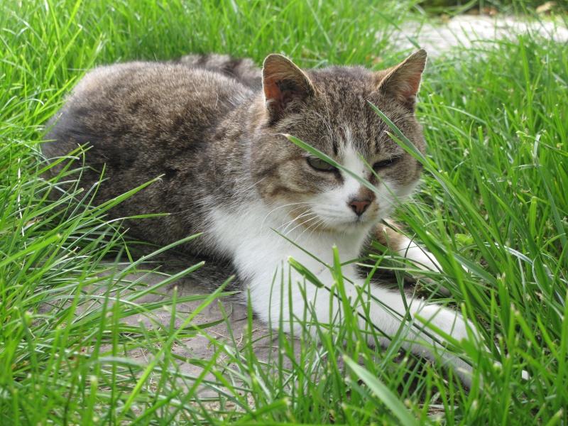 un p'tit coup de main des ptits korrigans pour une petite chatte nomade.... Img_8719