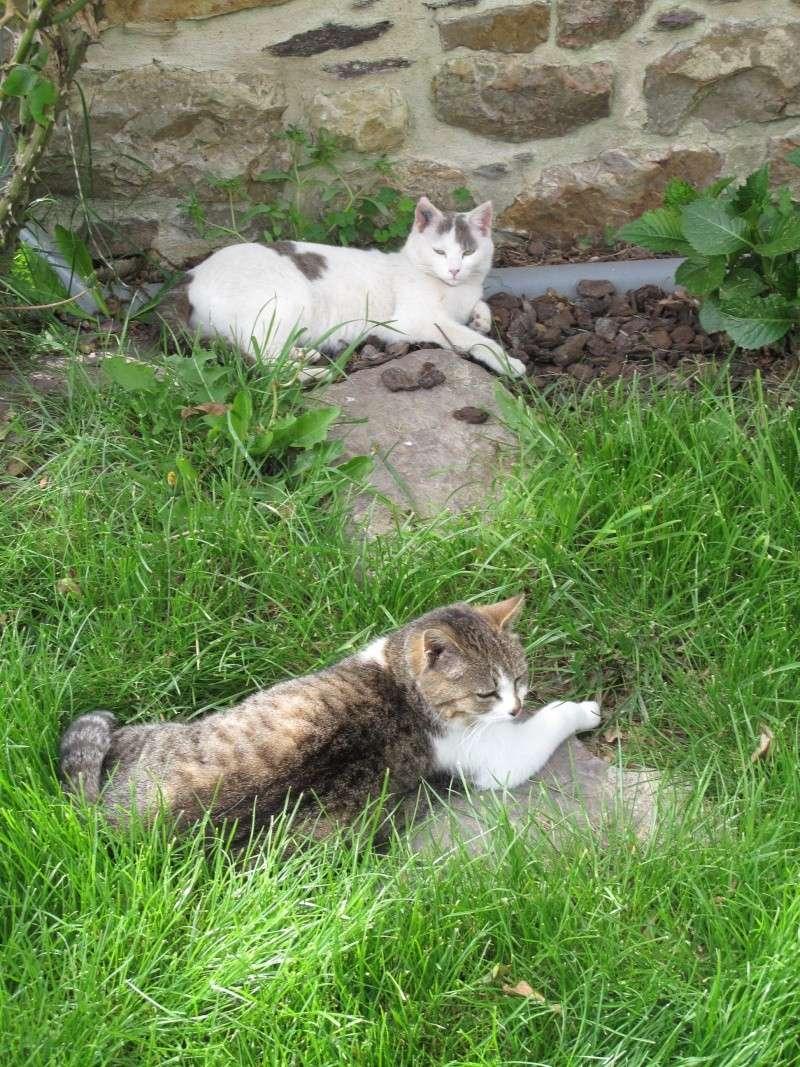 un p'tit coup de main des ptits korrigans pour une petite chatte nomade.... Img_8724