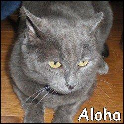 ALOHA MAGNIFIQUE MINETTE DE 3 ANS FIV ET FELV + Aloha10