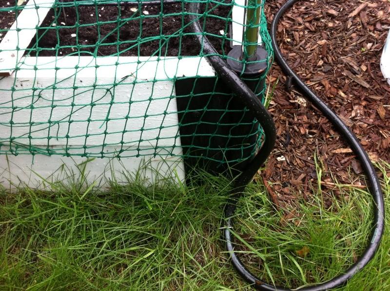 Drip Irrigation Img_0314