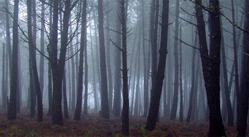 Bosque de Mystic Falls Bosque10