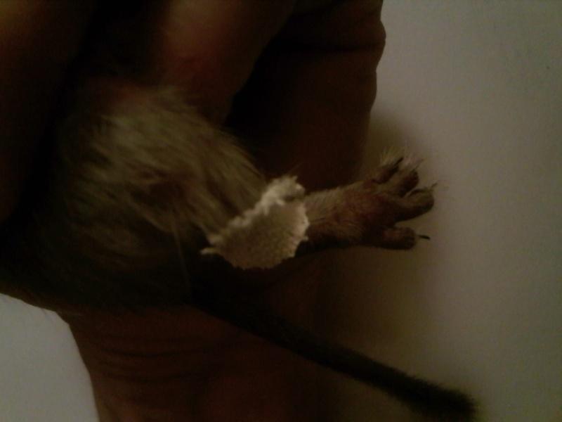 Nina a sa patte cassée !!! Img19910