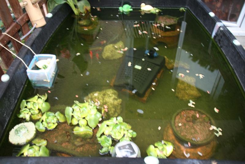 Bassin de mes carpes KoÏ 34 Img_5810