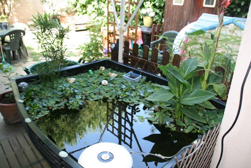 Bassin de mes carpes KoÏ 34 Img_9515