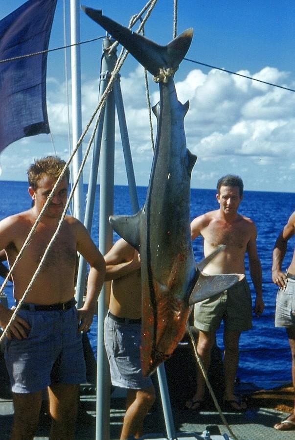 COMMANDANT ROBERT GIRAUD (AVISO) - Page 2 Requin10