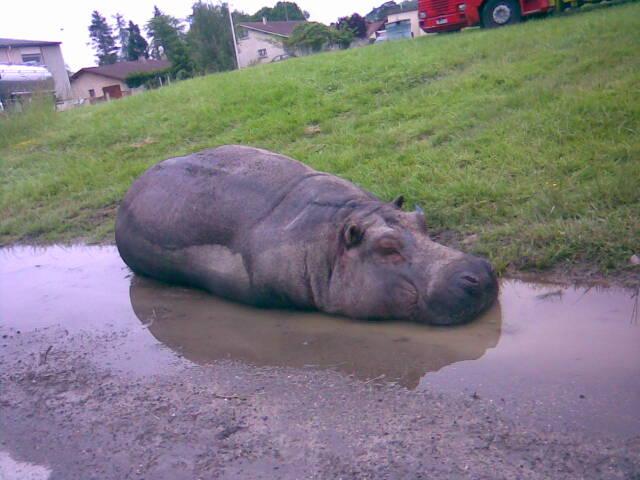 Mai 2007 Un printemps humide à Nogaro Hippo10