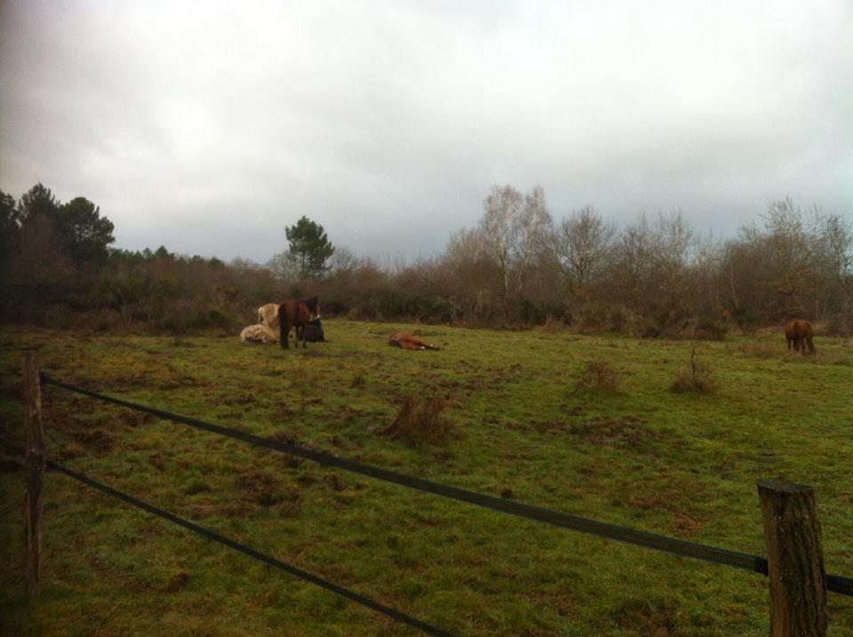Un PP sur 8 hectares : Février 2019 ! - Page 3 51762710