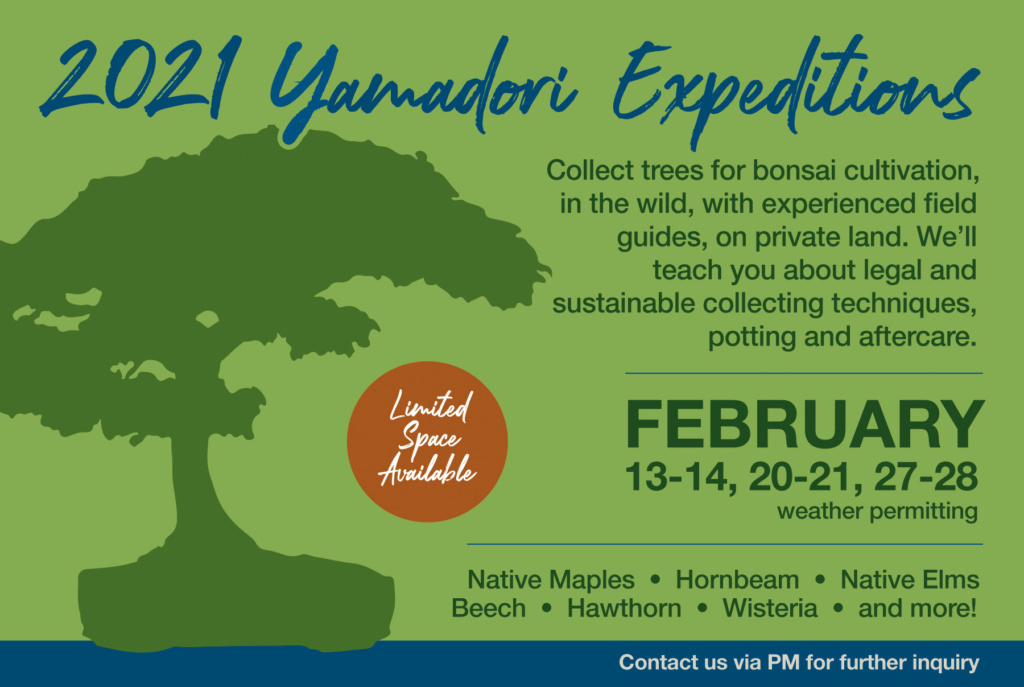 Yamadori Expeditions-  Ye12