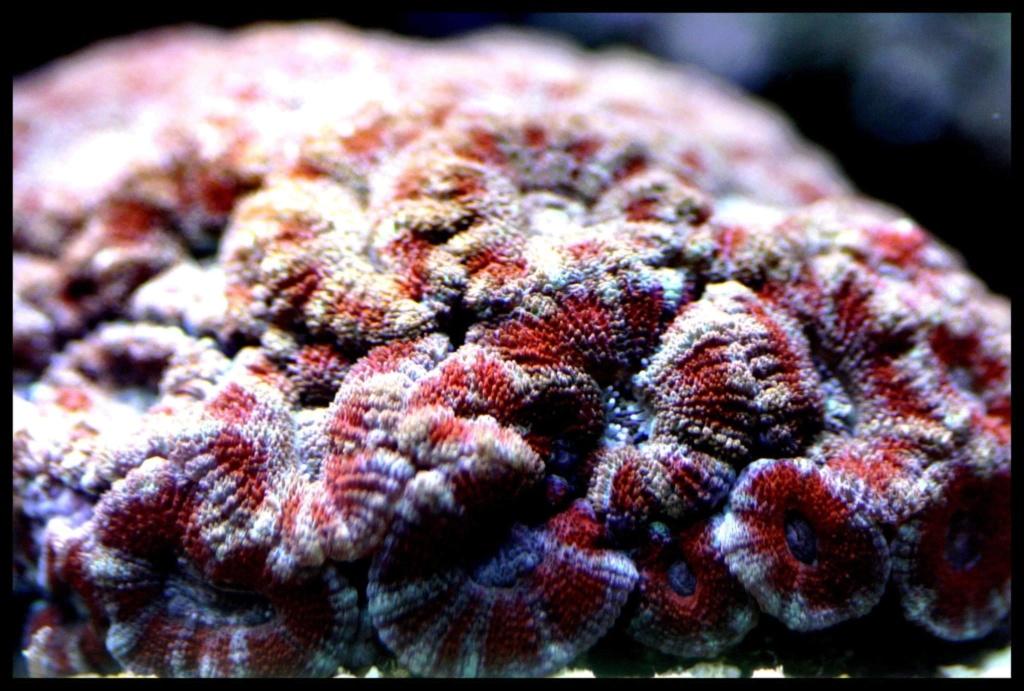 photos de poissons et coraux  - Page 5 0b9e1f10