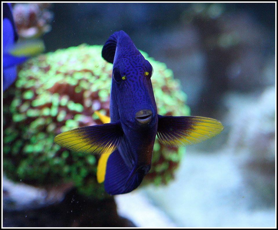 photos de poissons et coraux  - Page 4 12888710