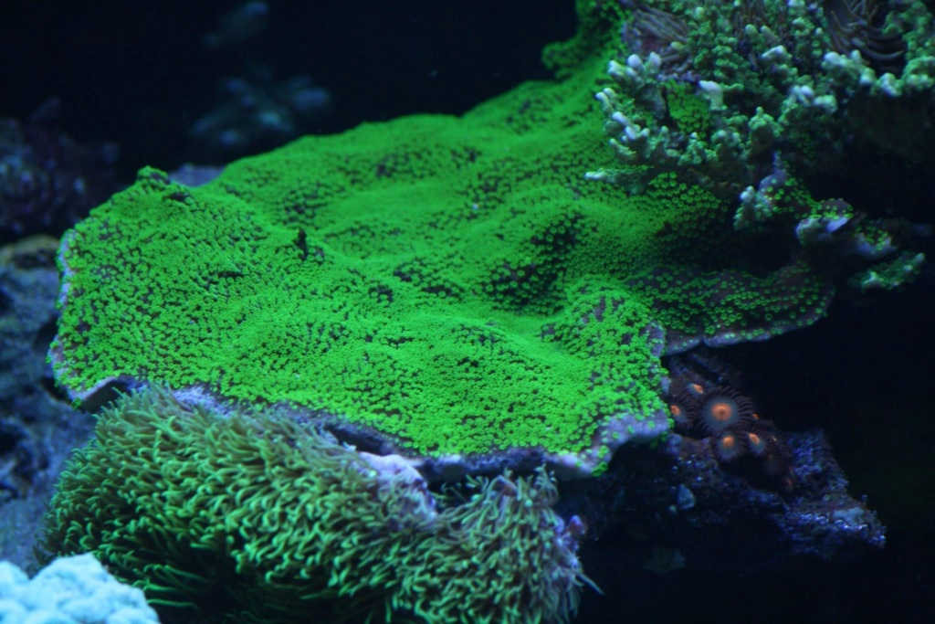photos de poissons et coraux  - Page 6 3d138210