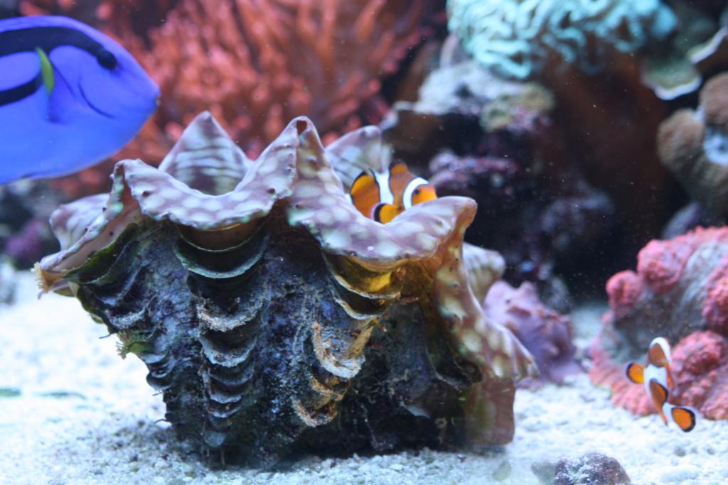 photos de poissons et coraux  - Page 3 Aujour12