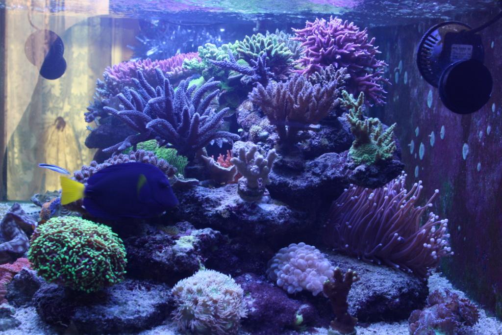photos de poissons et coraux  - Page 7 Aujour18