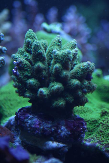 photos de poissons et coraux  - Page 5 Bourse17