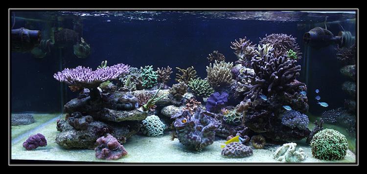 Marin86 : forum des aquariophiles d'eau de mer Chris_14