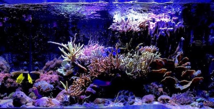 Marin86 : forum des aquariophiles d'eau de mer Damien14