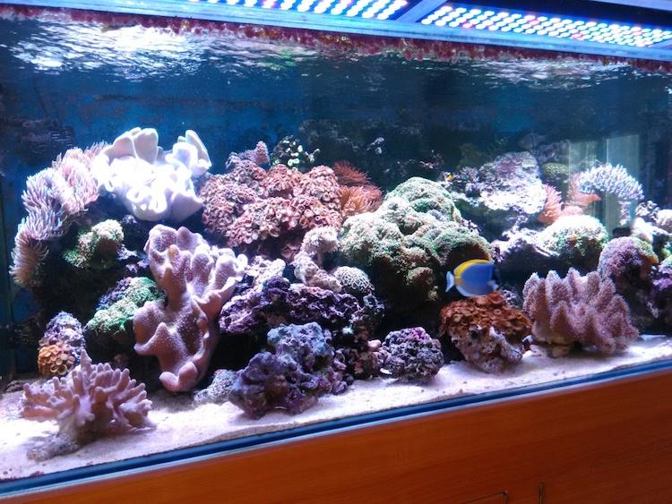 Marin86 : forum des aquariophiles d'eau de mer Daniel14