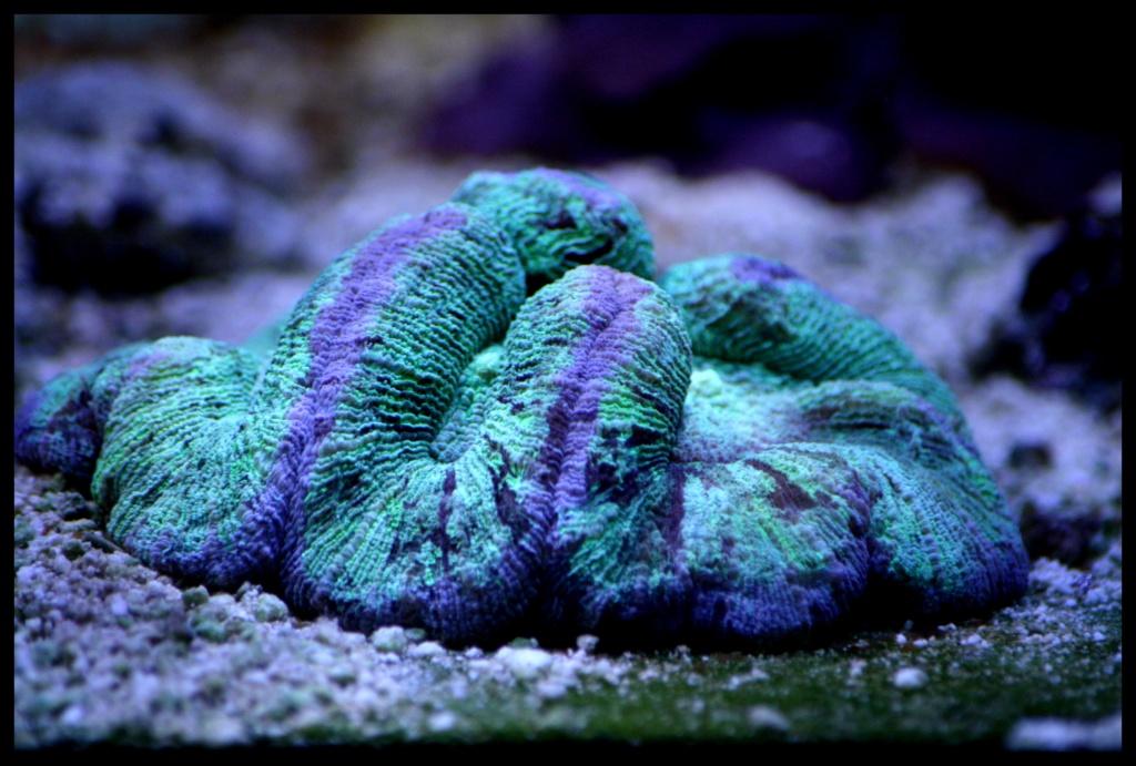 photos de poissons et coraux  - Page 5 Dernie18